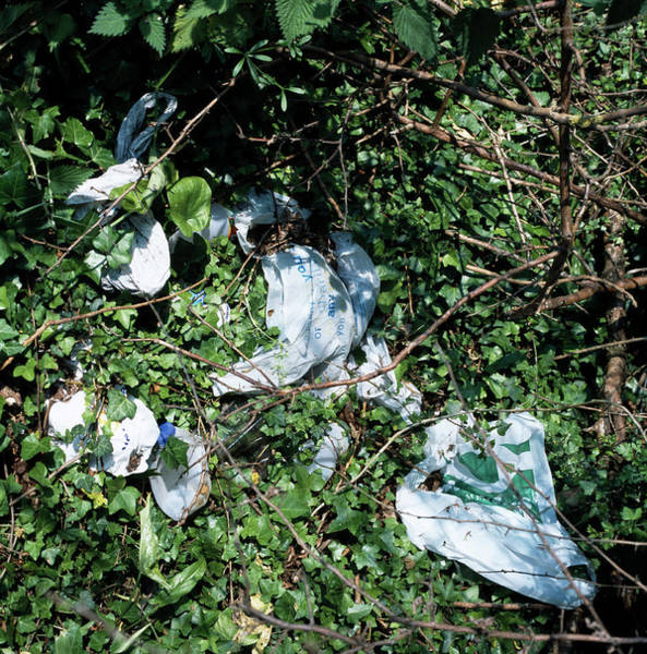 Litter Photograph - Litter by Sheila Terry/science Photo Library