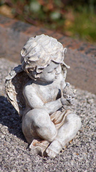 Photograph - Little Angel With Bird In His Hand - Sculpture by Eva-Maria Di Bella