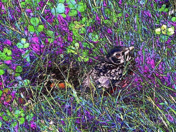 Photograph - Little Bird's First Flight -digital Art by Robyn King
