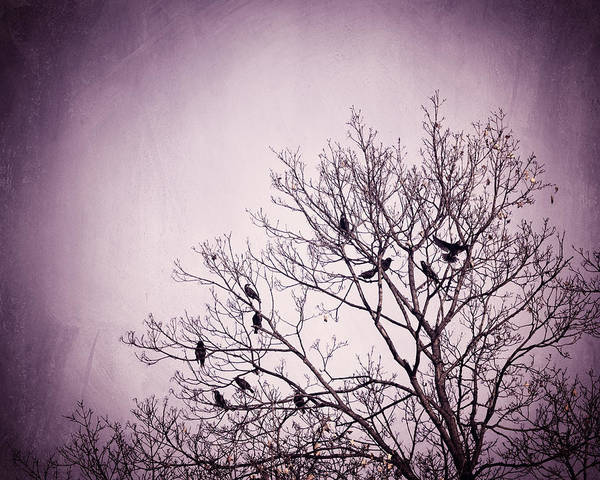 Wall Art - Photograph - Little Birds Of The Night by Carolyn Cochrane
