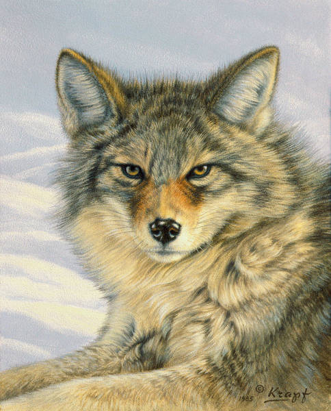Wall Art - Painting - Little Coyote by Paul Krapf