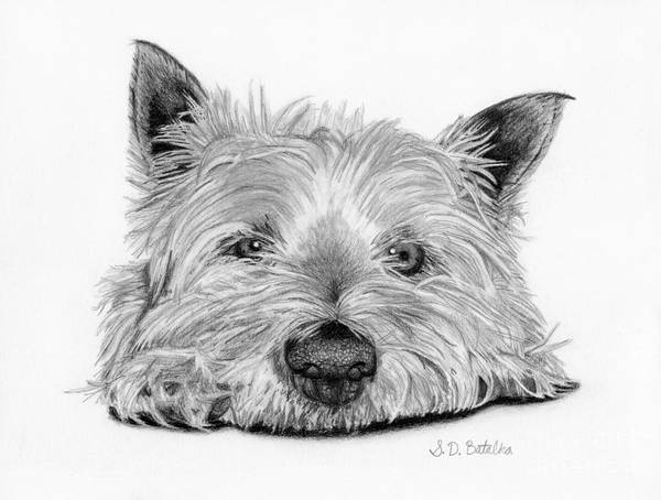Pet Portrait Drawing - Little Dog by Sarah Batalka