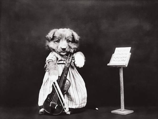 Wall Art - Photograph - Little Fiddler by Aged Pixel