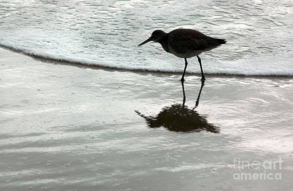 Sea Bird Photograph - Little Footsteps by Dan Holm