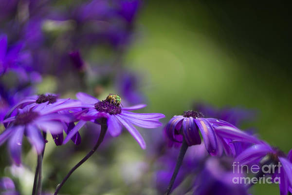 Photograph - Little Green Bug by Carrie Cole