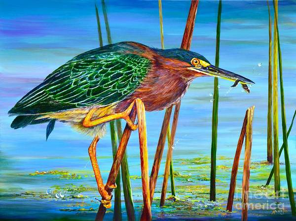 Little Green Heron Art Print