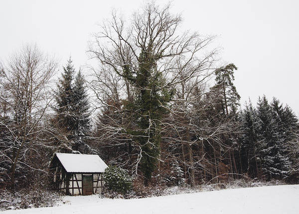 Photograph - Little Hood And Beautiful Trees In Winter by Matthias Hauser