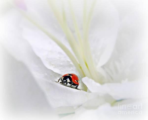 Mixed Media - Little Ladybug by Morag Bates