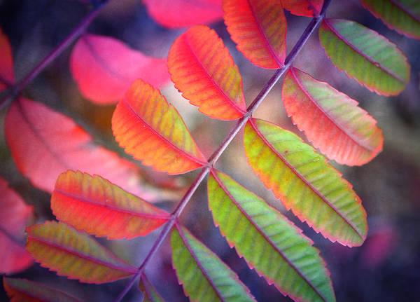 Photograph - Little Leaves by Tara Turner