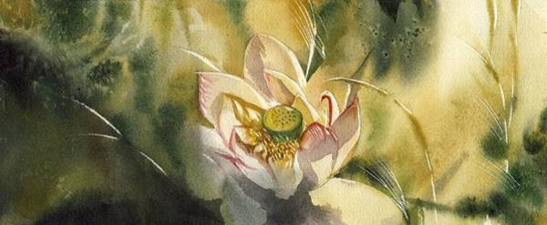 Painting - Little Lotus Painting by Alfred Ng