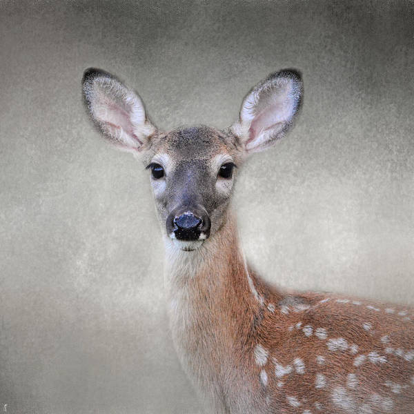 Little Miss Lashes - White Tailed Deer - Fawn Art Print