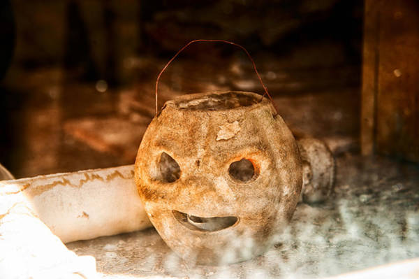 Wall Art - Photograph - Little Orange Face by Cat Connor