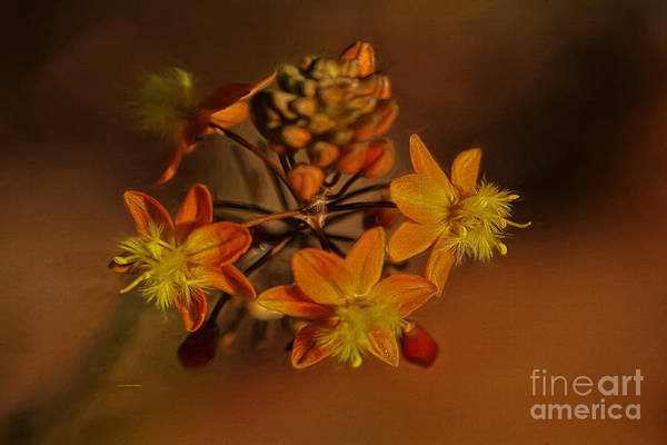 Painting - Little Orange Flowers by Deborah Benoit