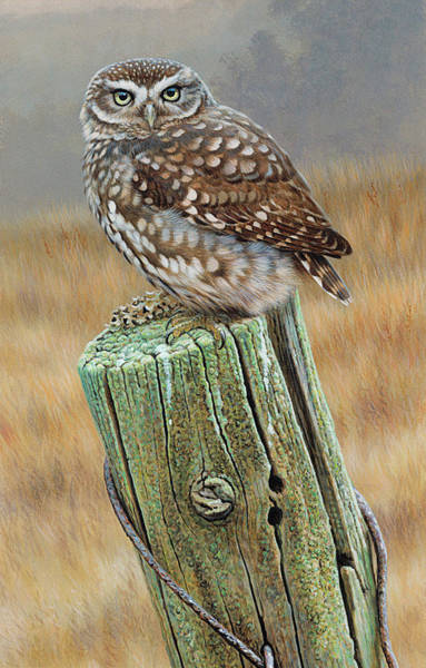 Little People Digital Art - Little Owl Athene Noctua Perching On by Andrew Hutchinson