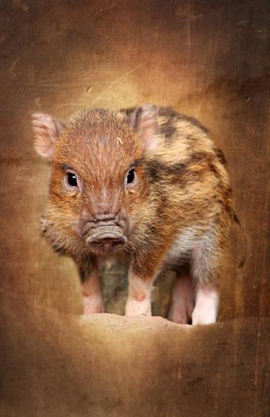 Mammal Mixed Media - Little Pig by Heike Hultsch