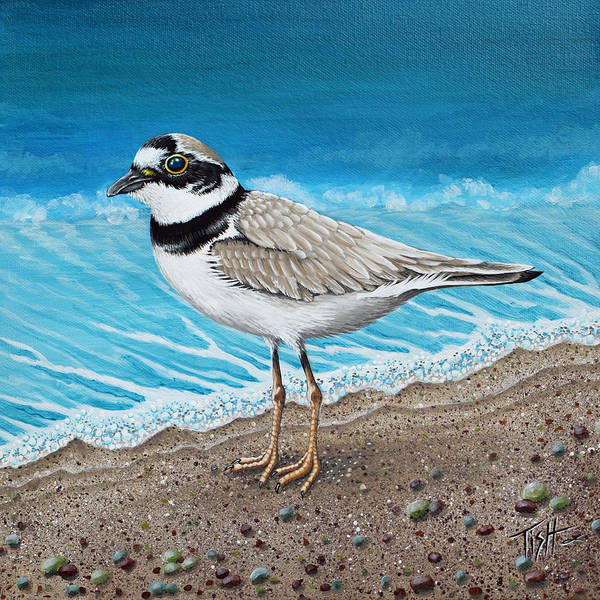 Painting - Little Plover by Tish Wynne