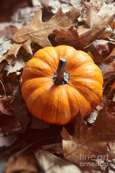Photograph - Little Pumpkin In A Bunch Of Leaves by Sandra Cunningham