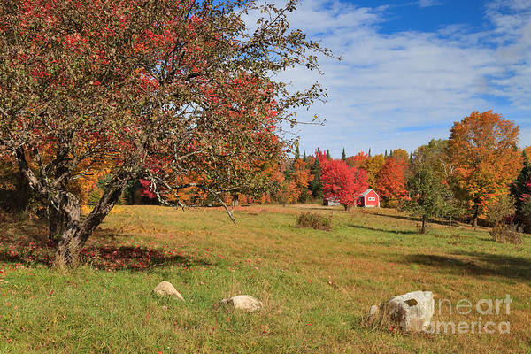 Photograph - Little Red Cabin On Long Pond Road -- Farther And Narrower by Charles Kozierok