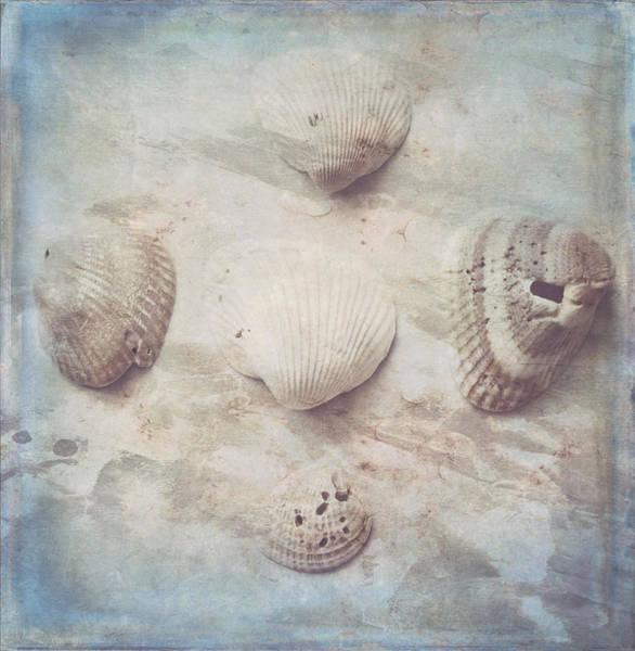 Wall Art - Photograph - Little Seashells by Toni Hopper