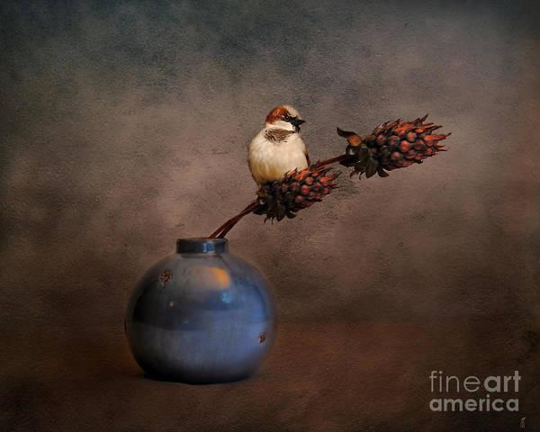 Photograph - Little Sparrow Friend by Jai Johnson