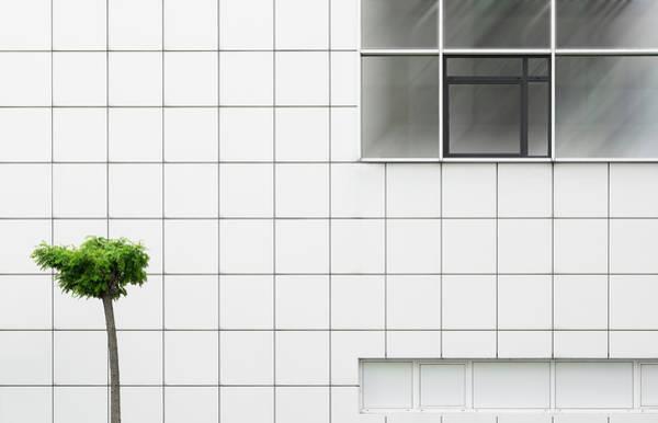 Green Plants Photograph - Little Tree by Greetje Van Son