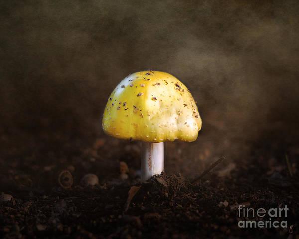 Photograph - Little Yellow Mushroom by Jai Johnson