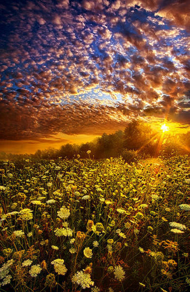 Photograph - Live Every Moment by Phil Koch