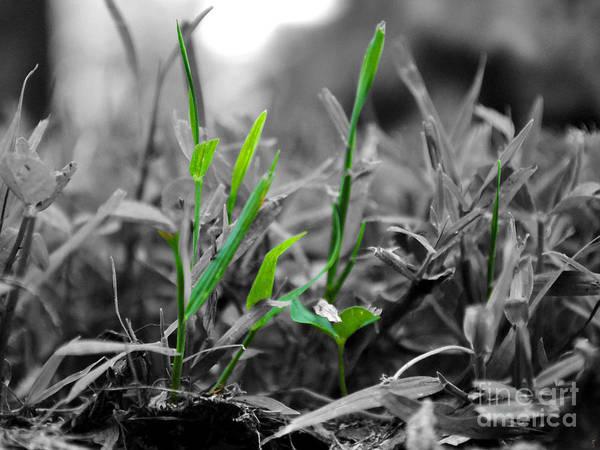 Photograph - Live Green by Jai Johnson