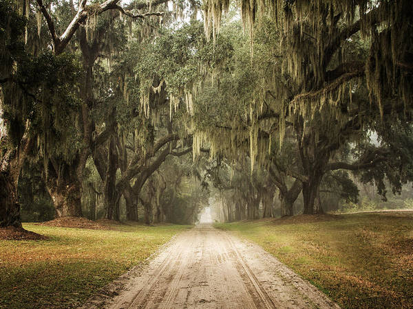 Sandra Anderson Wall Art - Photograph - Live Oak Allee' On A Foggy Morn by Sandra Anderson
