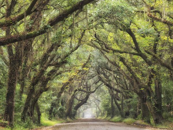 Photograph - Live Oak  Archway Horizontal 1  by Jo Ann Tomaselli