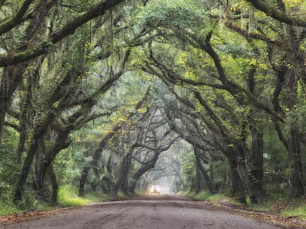 Photograph - Live Oak Archway Horizontal  2 by Jo Ann Tomaselli