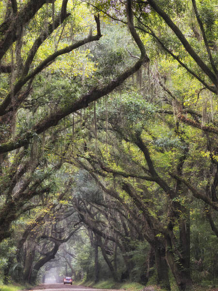 Photograph - Live Oak  Archway Verticle 2  by Jo Ann Tomaselli