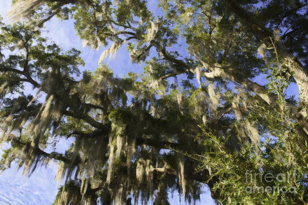 Photograph - Live Oak Dripping With Spanish Moss by Dale Powell