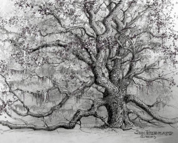 Wall Art - Drawing - Live Oak by Jim Hubbard