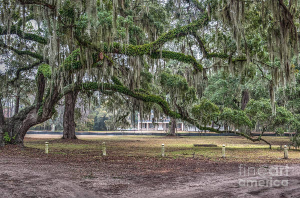 Photograph - Live Oak Tree Dripping With Spanish Moss by Dale Powell