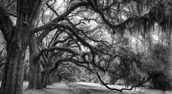 Photograph - Live Oak Tunnel - Black And White by Renee Sullivan
