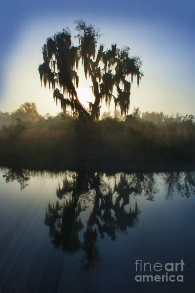 Photograph - Live Oak With Spanish Moss In Morning by Dan Friend