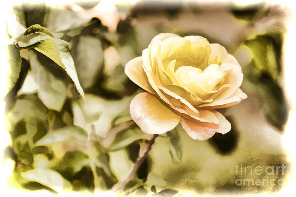 Painting - Live Yellow Rose Flower Painting In Color 3229.02 by M K Miller
