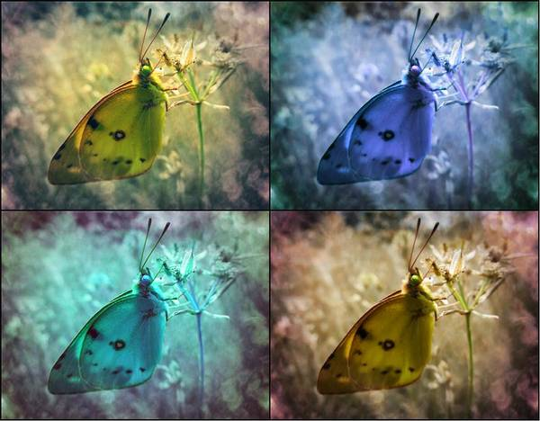 Photograph - Lives Of A Butterfly by Marianna Mills