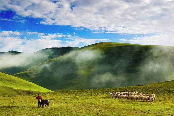 Livestock Photograph - Livestock In Grassland by Aldo Pavan