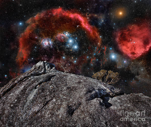 Photograph - Living Asteroid by Russell Brown