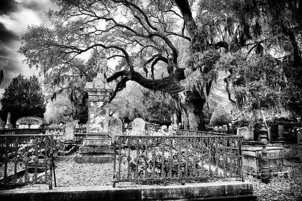 Photograph - Living Cemetery by John Rizzuto
