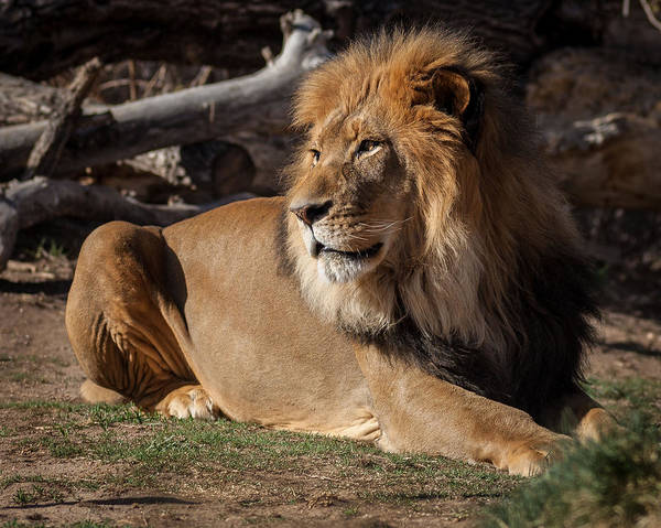Denver Zoo Photograph - Living Large by Steven Reed
