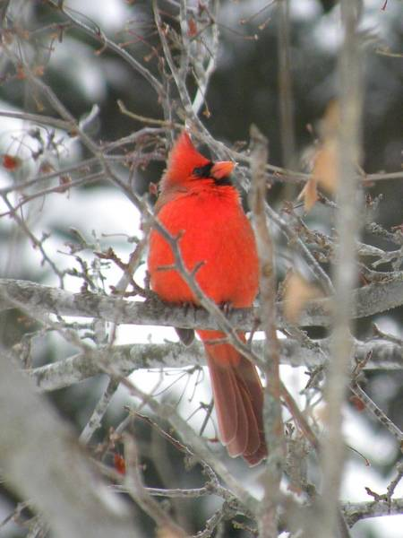 Photograph - Living Red by Peggy  McDonald