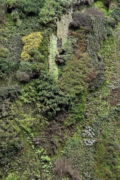 Caixa Forum Wall Art - Photograph - Living Wall by John Greim/science Photo Library