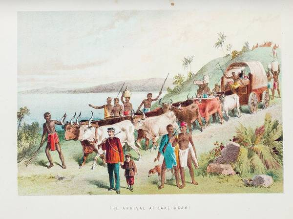 Porter Photograph - Livingstone At Lake Ngami by Gustoimages/science Photo Libbrary
