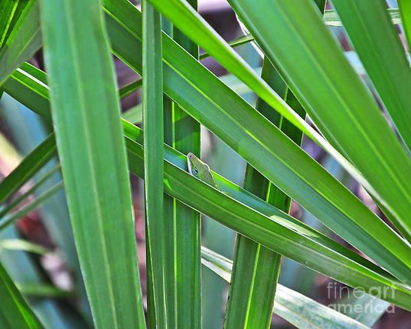 Green Anole Photograph - Lizard Lair by Al Powell Photography USA
