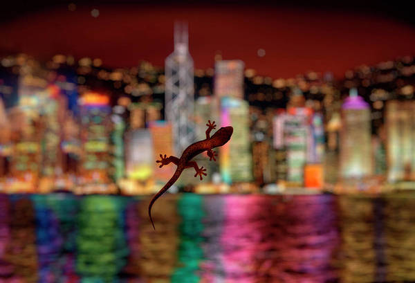 Hongkong Photograph - Lizard On Hotel Room Window With Modern by Per-Andre Hoffmann