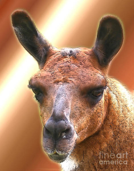 Digital Art - Llama Face by Smilin Eyes  Treasures