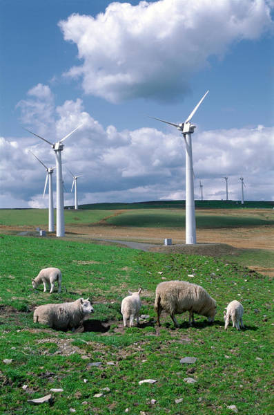 Farm Animals Photograph - Llandinam Wind Farm by Robert Brook/science Photo Library